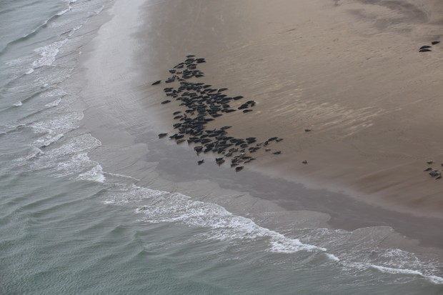 Aerial survey of the seals. © Thea Cox/ZSL