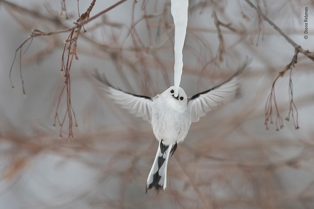 © Diana Rebman/Фотограф года дикой природы