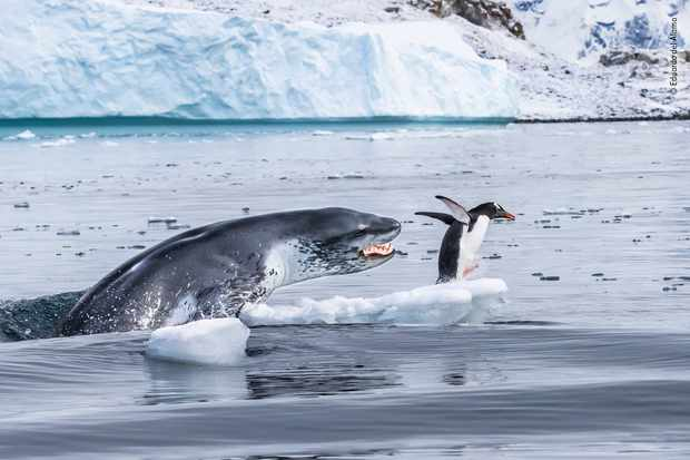 © Eduardo Del Álamo/Фотограф года дикой природы