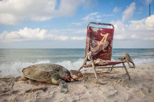 © Matthew Ware/Wildlife Photographer of the Year
