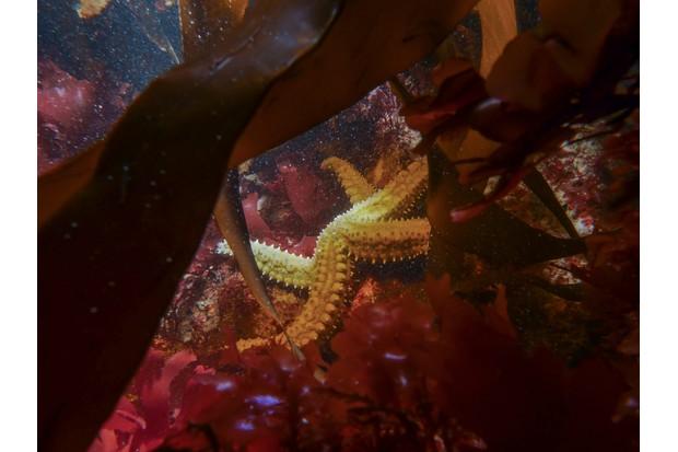 12-18 winner: spiny starfish (Falmouth, Cornwall). © Jacob Guy/British Wildlife Photography Awards