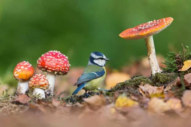 British Seasons winner (4 images in the series): blue tit in autumn (Rendham, Suffolk). © Paul Sawer/British Wildlife Photography Awards