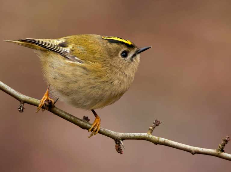British birds affected by climate change