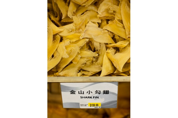 Shark fins for sale in a gourmet Chinese food store. Ed-FreemanGetty