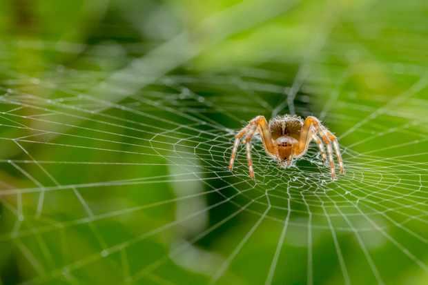 Hidden Britain winner: garden spider (Reading, Berkshire). © Alan Smith/British Wildlife Photography Awards
