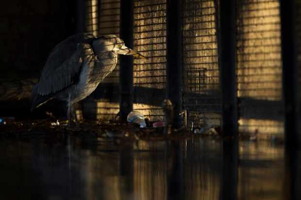 © Daniel Trim/British Wildlife Photographer of the Year