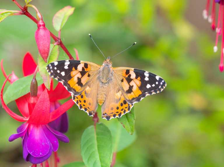 The year of the painted lady