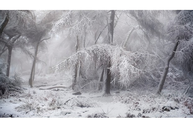 Wild Woods winner: Welcome to Narnia (European larch, The Roaches, Upper Hulme, Staffordshire). © Dave Fieldhouse/British Wildlife Photography Awards