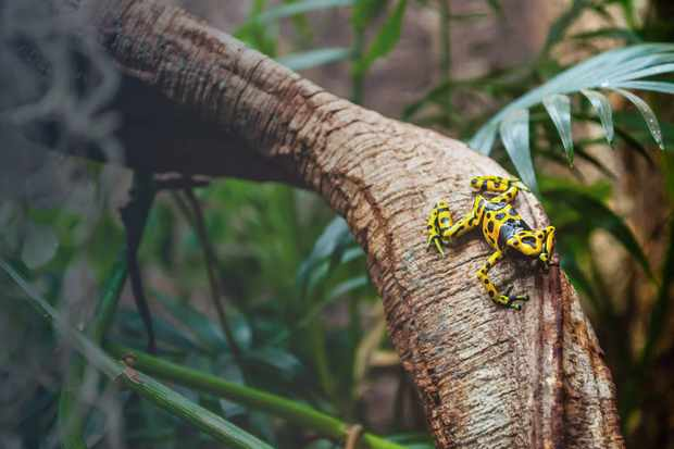 A colourful frog sitting on a branch in a rainforest