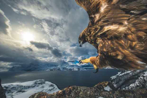 © Audun Rikardsen/Фотограф года дикой природы