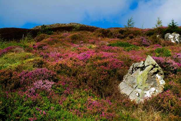 Wildflowers blooming on a hillside in Armagh. Design Pics Inc.