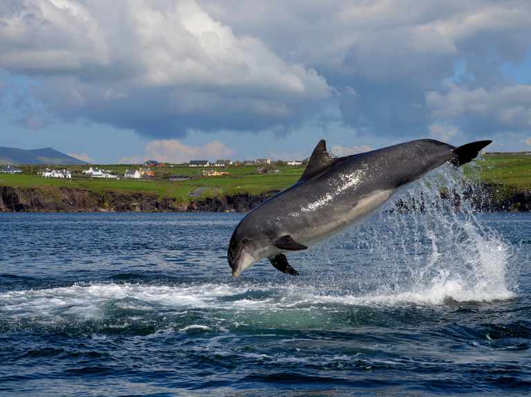 Famous dolphin secures a Guinness World Record