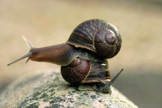 How Jeremy the 'shellebrity' snail found fame and advanced scientific understanding