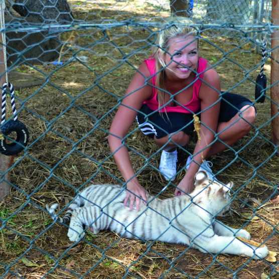 To ensure offspring carry the mutation, white tigers in captivity are often inbred. © Dinesen Venkatachellam/EyeEm/Getty
