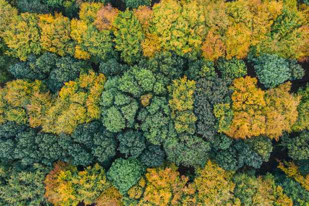 The Woodland Trust pledges to plant 50 million trees by 2025