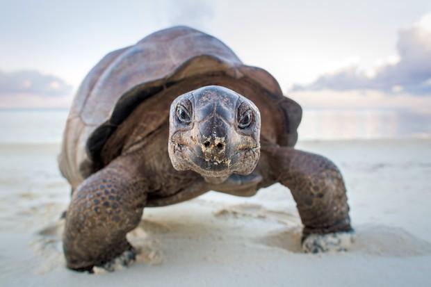Giant tortoises on Aldabra Island. © Huw Cordey/Silverback Films