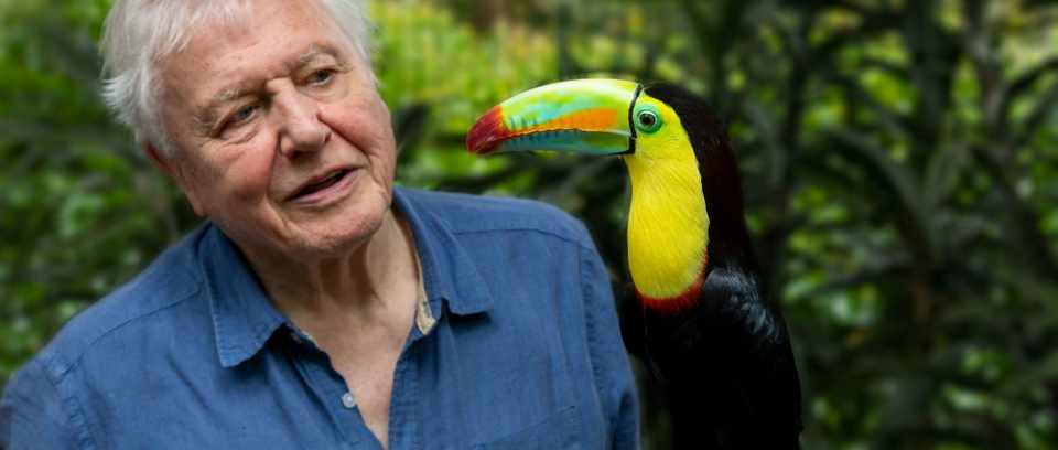 Life in Colour. Attenborough with toucan. Cropped