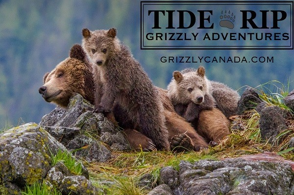 Tide Rip Grizzly Tours - Advertisement