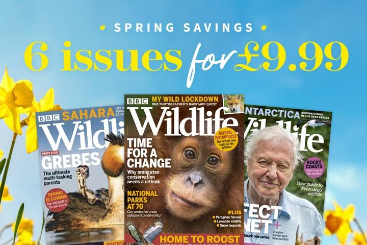 Spring21_Sidebar_720x480_Wildlife