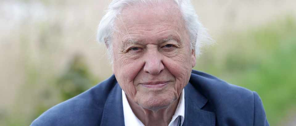 Sir David Attenborough looking straight into the camera, wearing a navy suit (but no tie and top shirt button undone)