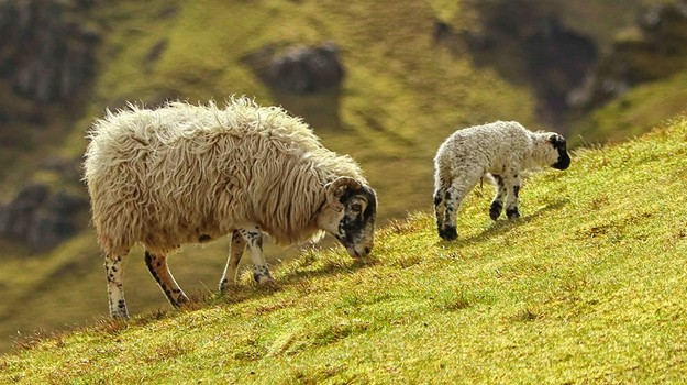 A guide to Bach's 'Sheep may safely graze'