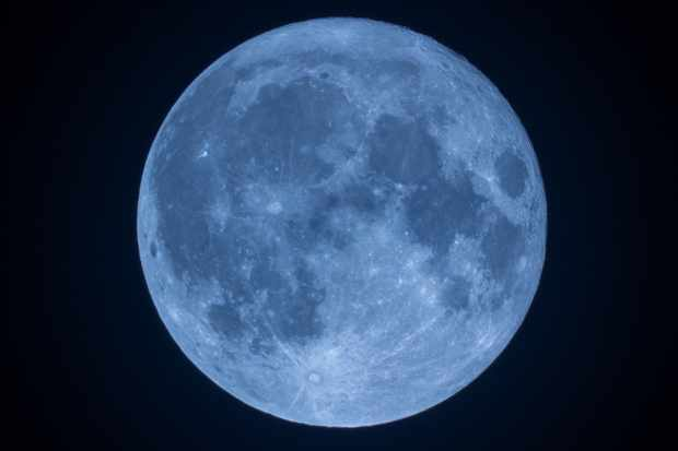Blue-Moon-IMG_9187_edited-1FM-6fd8ce5