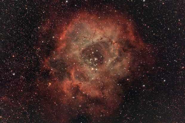 Rosette-78-9c4e1ba