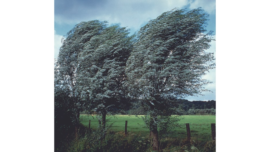 Two trees in the wind