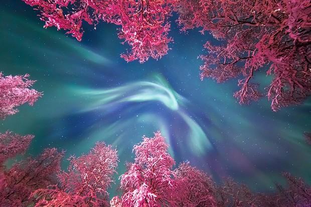 Auroral Crown © Yulia Zhulikova