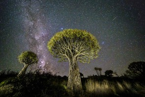Quiver trees and Shooting Star - Ivan van Niekirk, The Milky Way shines over quiver trees at Bet-El Farm in the Northern Cape of South Africa. The photographer used diffused LED lights to illuminate the trees rivalling the glow from the star above.