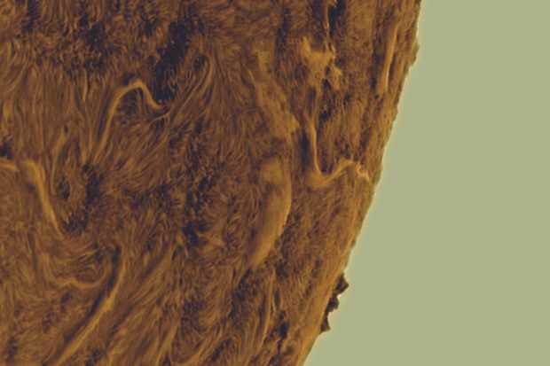 Gary's final processed image shows rich detail on the dynamic surface of our star. Credit: Gary Palmer