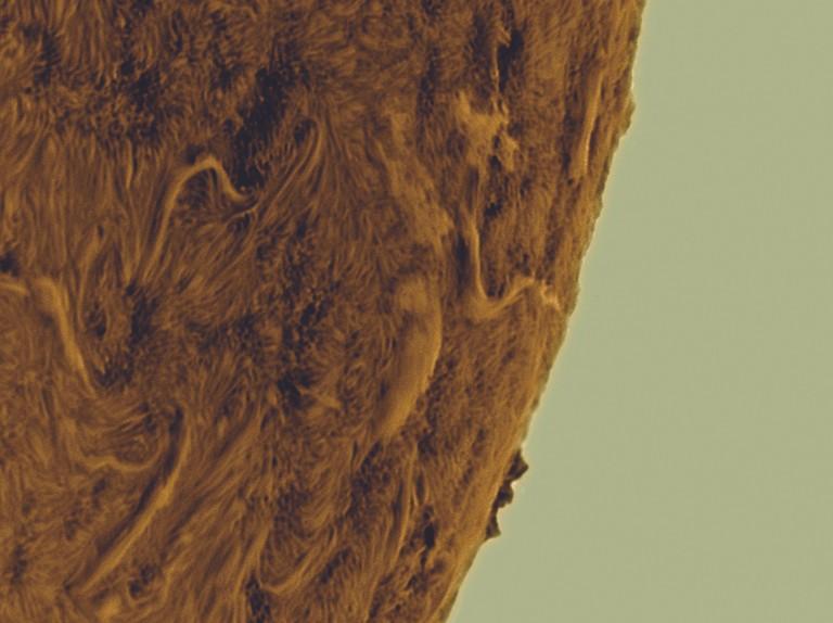 How to colourise astrophotos of the Sun