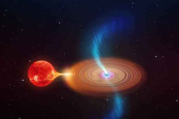 An artist's impression of V404 Cygni shows it drawing in material from a nearby star (left). Jets of gas (right) are released from its disc. Credit: icrar