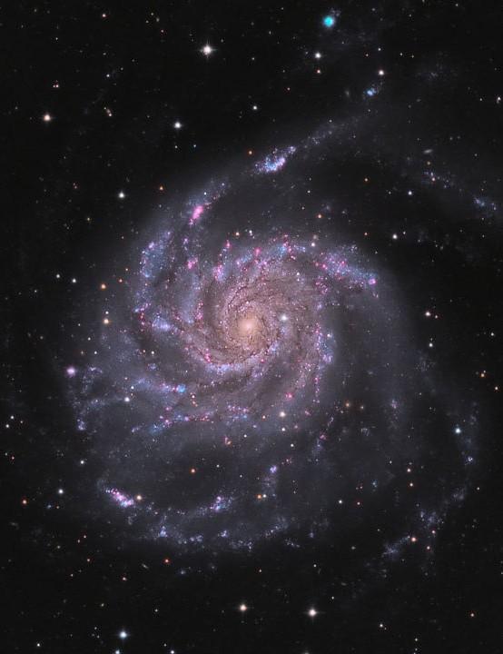The Pinwheel Galaxy, Rouzbeh Bidishahri, Vancouver, Canada, 10 June 2021. Equipment: QHY268M camera, Planewave CDK12.5 astrograph, Astro-Physics 1100 GTO mount