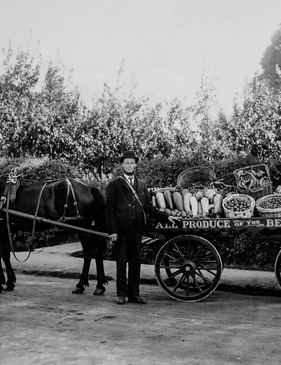 Greengrocer horse and cart