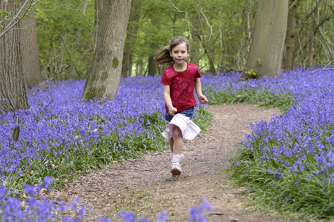10-of-the-best-places-to-see-bluebells-in-the-uk_87043