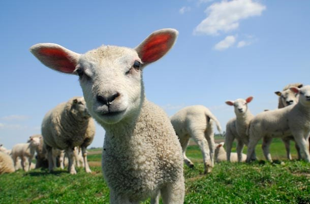 10-things-every-child-should-know-about-farm-animals-before-theyre-5_farm3