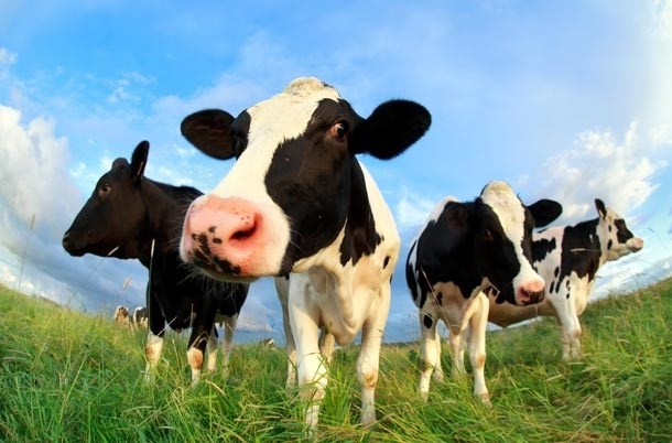 10-things-every-child-should-know-about-farm-animals-before-theyre-5_farm4