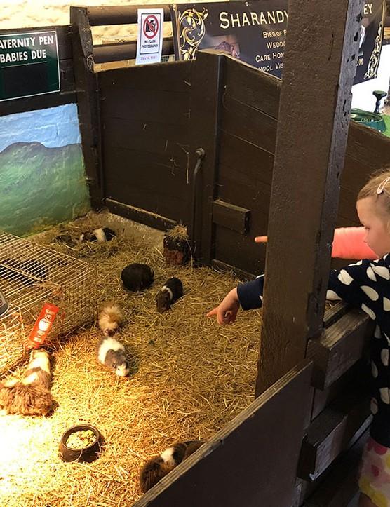 abbotsbury-childrens-farm,-dorset_205737