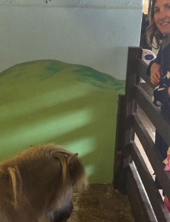 abbotsbury-childrens-farm,-dorset_205739