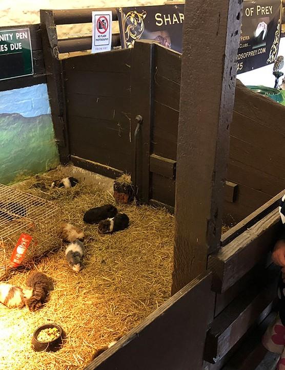 abbotsbury-childrens-farm,-dorset_205743