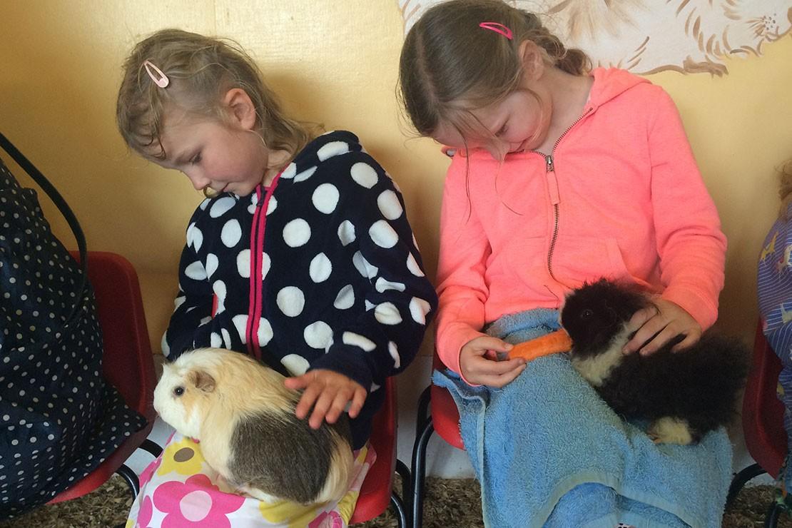 abbotsbury-childrens-farm-dorset_205744