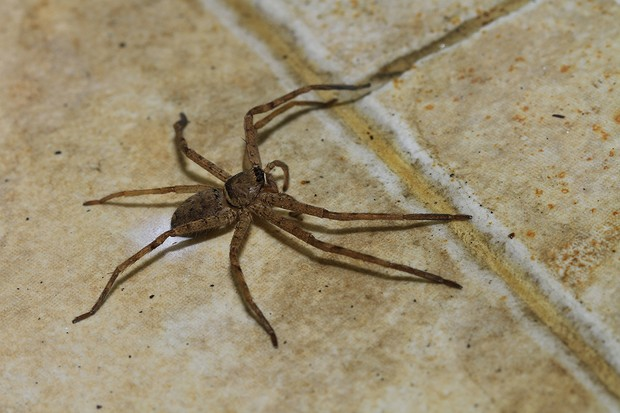 are-these-the-scariest-things-in-your-house_61474