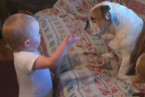 babbling-baby-has-an-argument-with-a-bulldog-video_56372