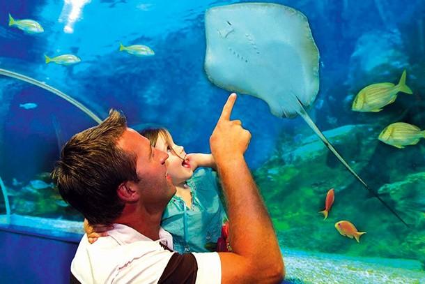 blue-reef-aquarium-newquay-review-for-families_60078
