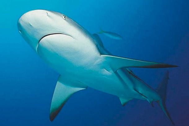 blue-reef-aquarium-newquay-review-for-families_60079