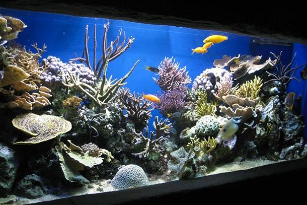 blue-reef-aquarium-newquay-review-for-families_60080