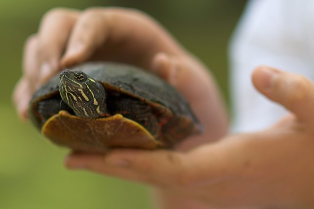boy-tries-to-smuggle-pet-turtle-onto-plane-in-his-pants_60337