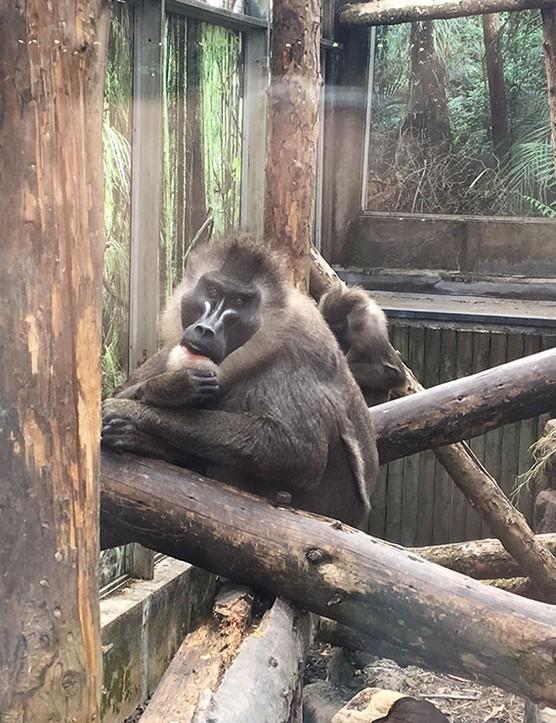 bristol-zoo_208266