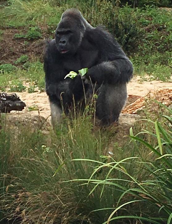 bristol-zoo_208267